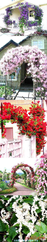 Лианы для сада — обзор наиболее неприхотливых сортов | Самоцветик