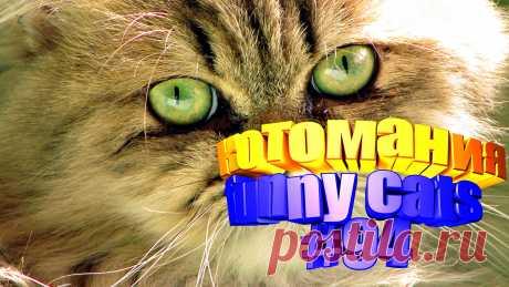 Любите смотреть смешные видео про котов? Тогда мы уверены, Вам понравится наше видео 😍. Также на котомании Вас ждут: видео кот,видео кота,видео коте,видео котов,видео кошек,видео кошка,видео кошки,видео о котах, видео о смешных кошках, видео прикол, видео про, видео с котиками, видео с кошками, видео смешная кошка, видео смешное о кошках, видео смешные кошка, видео эти смешные кошки, говорящие коты видео, для котов видео, для кошек, и кошки, кот видео, кот смешное видео, котик, котики мило