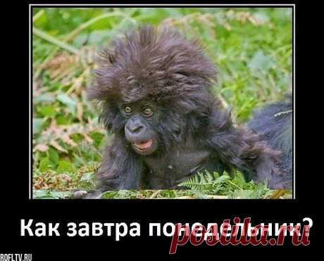 Воскресный позитивчик - Фото - Калейдоскоп Эмоций