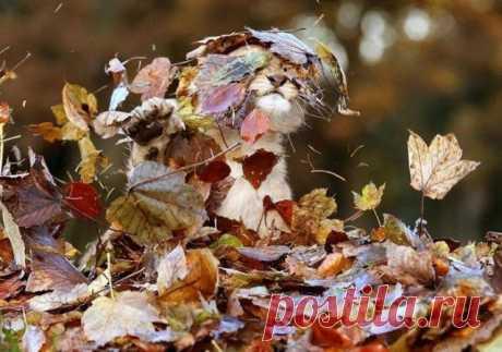 Осенне-лиственный позитив.