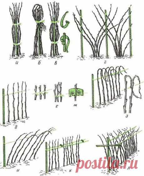 Сад | Page 2 | На даче