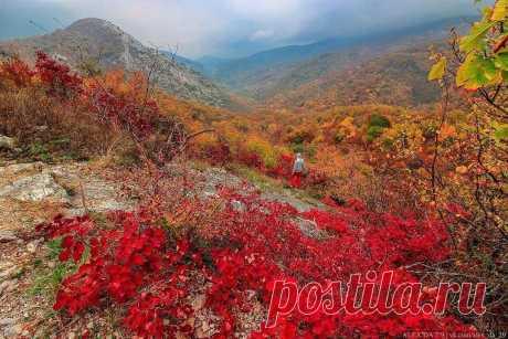 Прекрасный вид на скалу Серт-Кая и гору Сююрю-Кая  #серткая