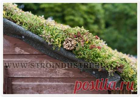 green (grass) Scandinavian roofs