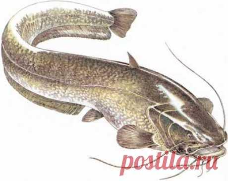 Alphabetical catalog of fishes