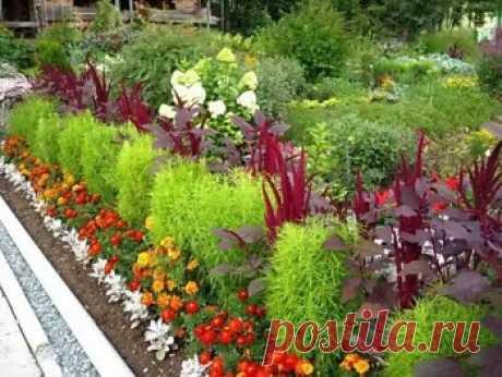 Какие низкорослые многолетники посадить, чтобы цвели все лето | Дача - впрок