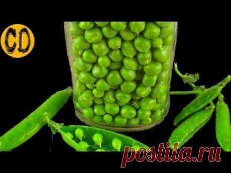 ГОСТ ЗЕЛЕНЫЙ ГОРОШЕК  Консервированный  БЕЗ УКСУСА! Самый лучший рецепт консервации зеленого горошка