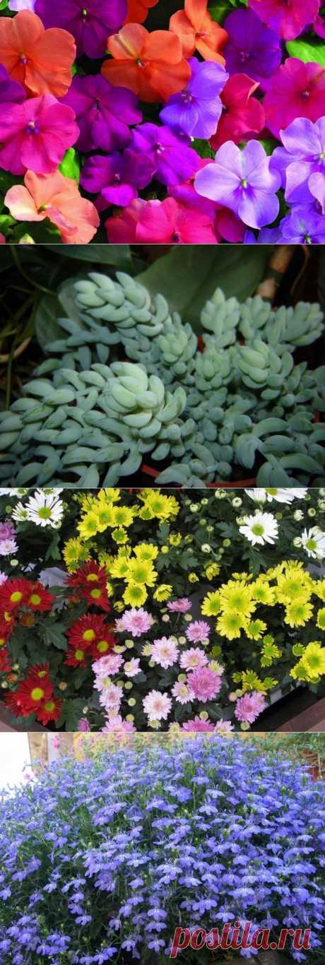 10 наиболее подходящих растений для выращивания в подвесных горшках | САД НА ПОДОКОННИКЕ