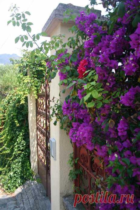 Чинкве-Терре - национальный парк Италии.