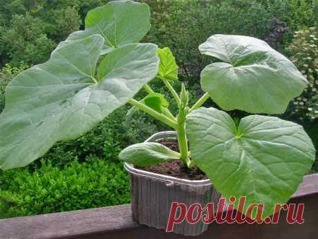 Cuando sentar las semillas a las plantas: likbez para las teteras hortelanas - MirTesen