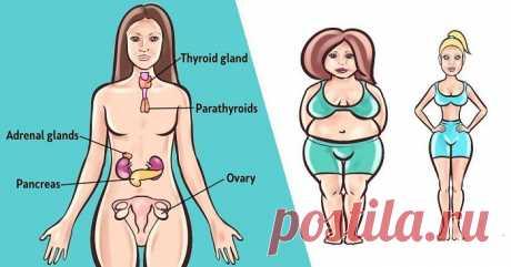 Топ-6 трав для баланса ваших гормонов естественным способом - Упражнения и похудение Проверенные средства! Гормональный дисбаланс может быть причиной симптомов, которые вы испытываете, таких как беспокойство, вздутие живота или хроническая усталость, увеличение веса, поскольку это может повлиять на ваше общее состояние здоровья. Гормоны играют самую важную роль в нашем организме, поскольку они регулируют наше настроение, обмен веществ, пищеварение, репродукцию, дыхание, фу...