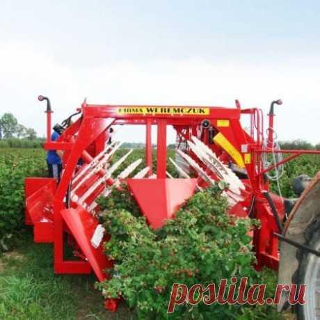 Полурядный комбайн для уборки осенней малины NATALKA из Польши купить в Минске и Беларуси, цены