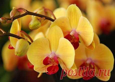 6 секретов ухода за орхидеей Орхидея в доме смотрится необычайно красиво. Но все же она — растение капризное, а поэтому эти 6 секретов ухода за орхидеей обязательно пригодятся тем, кто решил украсить дом этим чудесным цветком. Ко...