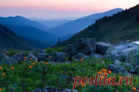 Цветы жарки — красивейшие цветы Сибири (сибирская роза)