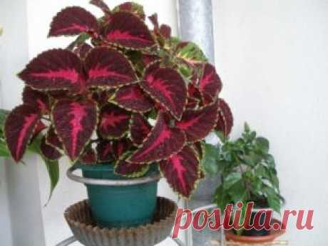 Самые быстрорастущие комнатные растения (фото с названиями) и цветущие домашние цветы с быстрым ростом