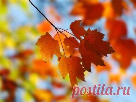 осень... поэзия души...