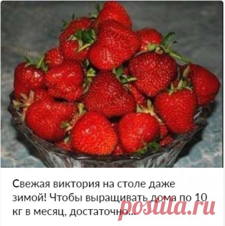 Свежая виктория на столе даже зимой! Чтобы выращивать дома по 10 кг в месяц, достаточно...ᅠᅠᅠᅠᅠᅠᅠᅠᅠᅠᅠᅠᅠᅠᅠᅠᅠᅠᅠᅠᅠᅠᅠᅠᅠᅠᅠᅠᅠᅠᅠᅠᅠᅠᅠᅠᅠᅠᅠᅠᅠᅠᅠᅠᅠᅠᅠ ᅠᅠᅠᅠᅠᅠᅠᅠᅠᅠᅠᅠᅠᅠᅠᅠᅠᅠᅠᅠᅠᅠᅠᅠᅠᅠᅠᅠᅠᅠᅠᅠᅠᅠᅠᅠᅠᅠᅠᅠᅠᅠᅠ  ᅠᅠᅠᅠᅠᅠᅠᅠᅠᅠᅠᅠᅠᅠᅠᅠᅠᅠᅠᅠᅠᅠᅠᅠᅠᅠᅠᅠᅠᅠᅠᅠᅠᅠᅠᅠᅠᅠᅠᅠᅠᅠᅠᅠᅠᅠᅠ ᅠᅠᅠᅠᅠᅠᅠᅠᅠᅠᅠᅠᅠᅠᅠᅠᅠᅠᅠᅠᅠᅠᅠᅠᅠᅠᅠᅠᅠᅠᅠᅠᅠᅠᅠᅠᅠᅠᅠᅠᅠᅠᅠ   ᅠᅠᅠᅠᅠ  буклированная пряжа   оформление нарезок