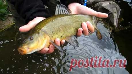 Летняя рыбалка на линя. Коротко