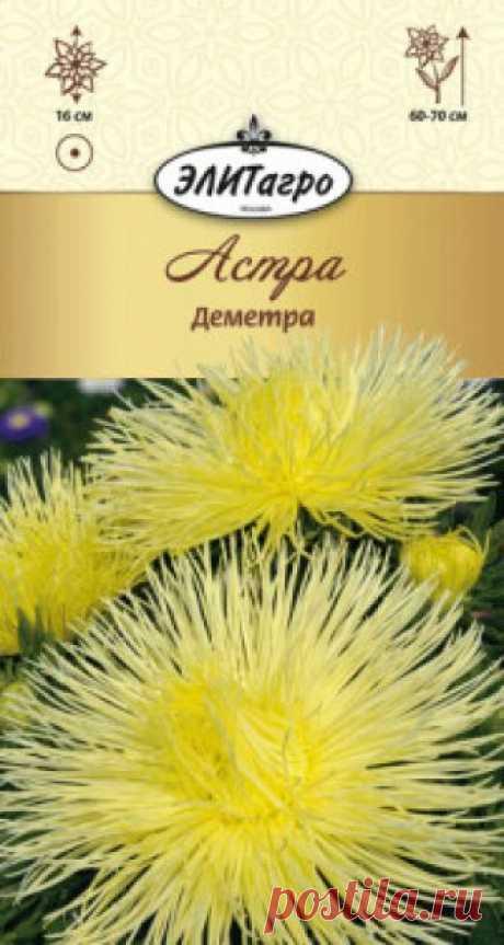 """Семена. Астра """"Деметра желтая"""", однолетник Вес: 0,1 г. Всхожесть: 90%. Обильноцветущая серия астр. Растение пирамидальной формы, сильноветвистое, высотой 60-70 см. Цветоносы прочные упругие, соцветия полусферические, лучевые, махровые, диаметром до 16 см, желтой окраски. Цветение обильно и продолжительно с конца июля и до..."""