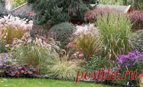 That it is possible to put near coniferous – examples of successful combinations of plants the Period when the same thujas landed in the middle of a lawn and were limited to it, for a long time passed. Now coniferous all flowers, the sizes and forms safely combine with other plants, receiving improbable to...