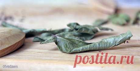 Листья карри Перец карри знаем. Если листья, то приходят на ум лавровые. А тут вот же какое объединение получилось карри с листьями. Но эти листочки совсем не знакомая нам лаврушка. Они совсем другие. И на вид, и по своим свойствам.