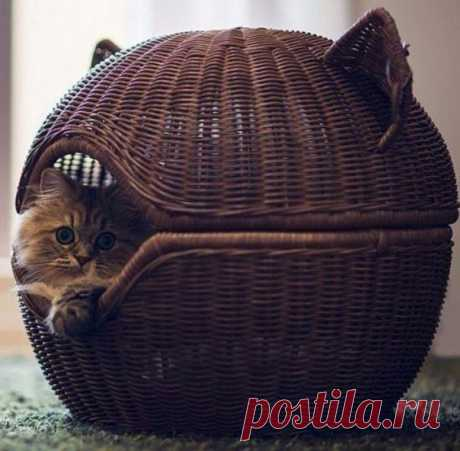 Lodge for a cat