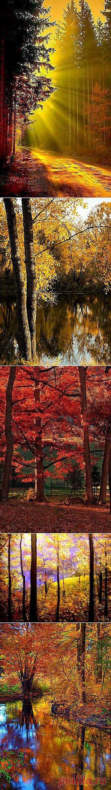 Ольга : осень | Постила.ru