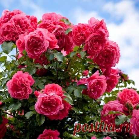 На данном изображении может находиться: цветок, растение, небо, облако, на улице и природа