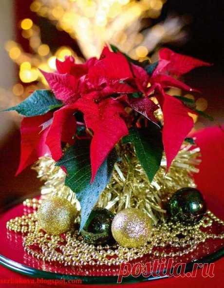 Новогодний декор своими руками фото – Новогодний декор своими руками: 125+ идей украшения дома к Новому году