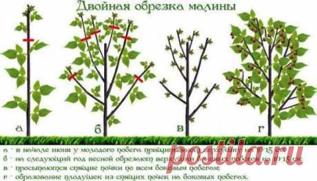 Обрезка садовых кустарников