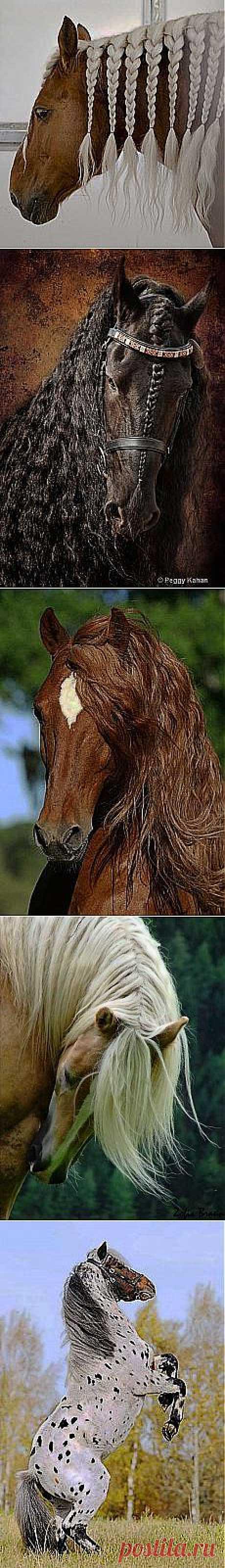 галина осетрова: Лучшие друзья людей - лошади. | Постила