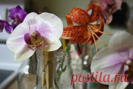 Как засушить цветы с помощью парафина.
