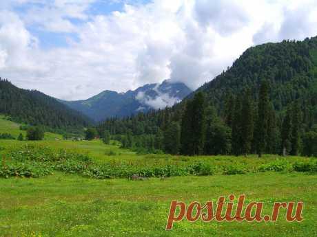 """""""Альпийские луга"""" в горах Абхазии"""
