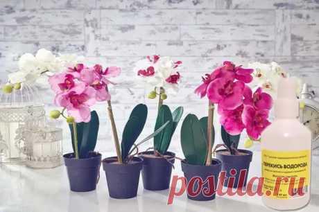 Перекись водорода для орхидей: как применять для подкормки, правила полива растения - Цветочки - медиаплатформа МирТесен