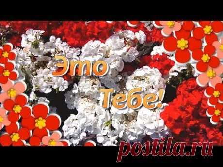 (1) Это Тебе Просто Так Красивые Цветы🌸Цветы для Тебя🌸Красивые Цветы для Друзей - YouTube