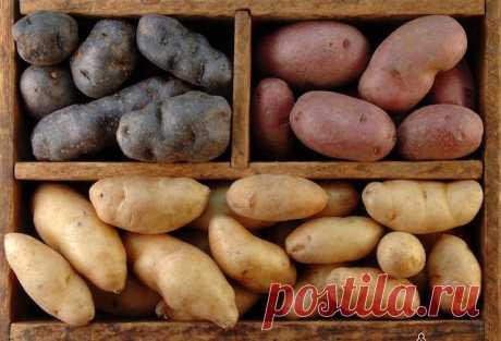 Как сохранить картошку надолго? — Полезные советы