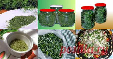 Зелень на зиму - 143 рецепта приготовления пошагово Зелень на зиму - быстрые и простые рецепты для дома на любой вкус