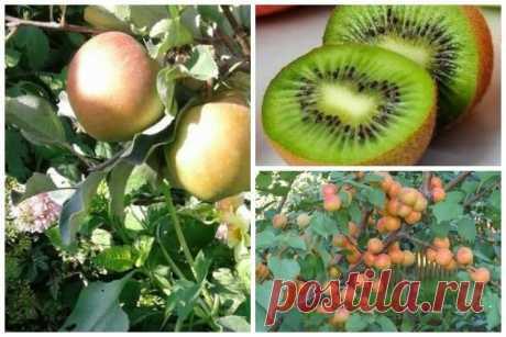 5 фруктов для снижения холестерина | Ваши 6 соток | Яндекс Дзен