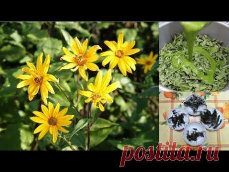 Диабет: ферментация листьев топинамбура обычная, а вторая - соком кипрея.