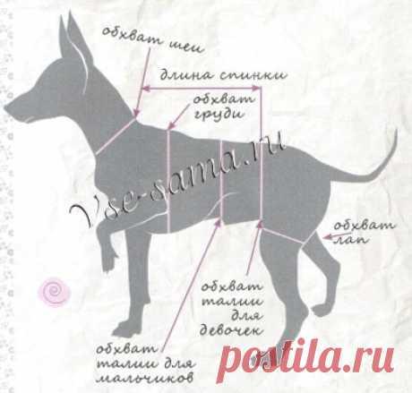Снятие мерок с собаки - Вязание для собак