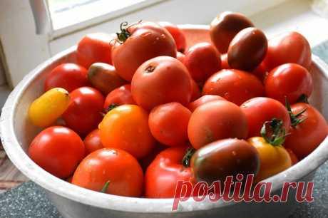 3 способа дозревание снятых помидор, которые сохранят ваш урожай. Редко так бывает, что все томаты созревают на корню. Мы сегодня поговорим про 3 наиболее популярных способа доведения томатов до полной зрелости.