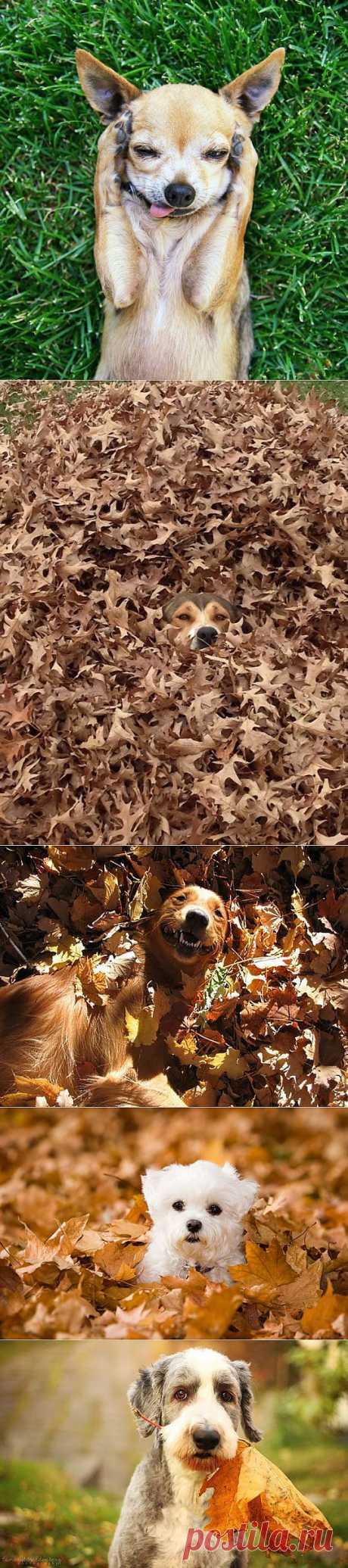 (+1) тема - Самые забавные осенние фотографии собачек | САМЫЙ СОК!