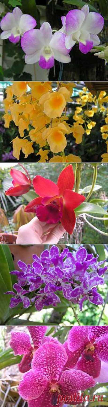 Как приручить орхидею? Непокорная тропиканка |