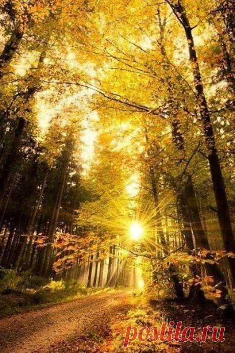 Осенний ясный день сияет ярким светом , полупрозрачна желтых листьев тень...Осень - идеальное время, чтобы начать всё по-новому и забыть всё старое.