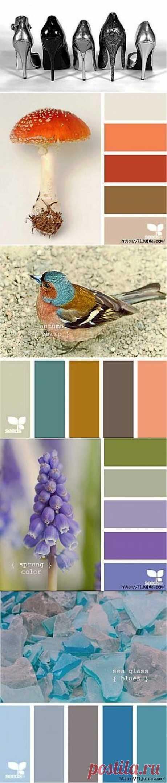 Гармонично сочетаем оттенки цветов | ШПИЛЬКИ