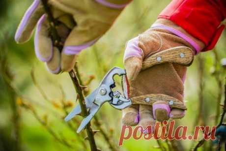 Как правильно черенковать розы: сроки, температура и секреты приживаемости | Розы (Огород.ru)