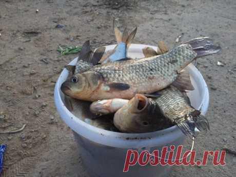 Раскрываю рецепт самодельной прикормки на крупного карася и леща | Рыбалка XXI века | Яндекс Дзен
