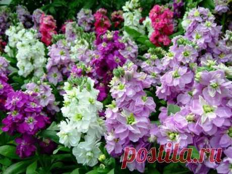 Прекрасные, нежные, яркие и ароматные цветы, которые стоит посадить в своём саду | САД | Яндекс Дзен