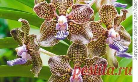 Las orquídeas para los principiantes: 8 consejos simples