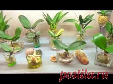 Орхидеи в воде. Гибель,или  успешная реанимация? ЭКСПЕРИМЕНТ!НЕ ПОВТОРЯТЬ!!!