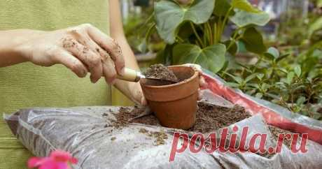 Top dressing for houseplants